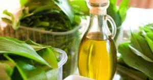 culture de l'huile de ricin